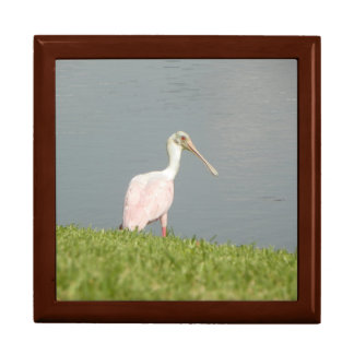 SWEET ROSEATE SPOONBILL Gift Box