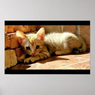 Sweet Sad Kitten Poster