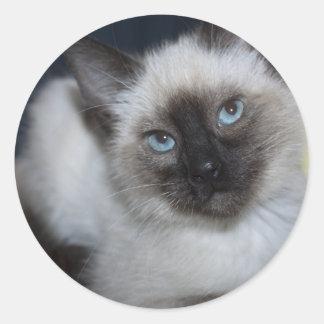 Sweet Siamese Classic Round Sticker