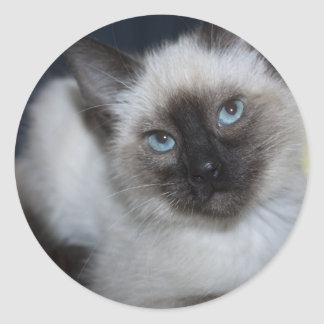 Sweet Siamese Round Sticker