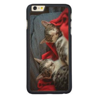 Sweet Sleeping Kitties Carved Maple iPhone 6 Plus Case
