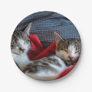 Sweet Sleeping Kitties Paper Plate