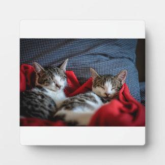 Sweet Sleeping Kitties Plaque