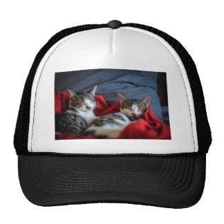 Sweet sleeping Kitties Trucker Hat