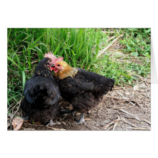 Sweet Snuggling Chickens Photography Custom Greeting Card