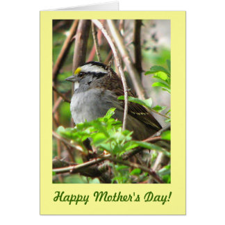 Sweet Sparrow for Mother's Day Card