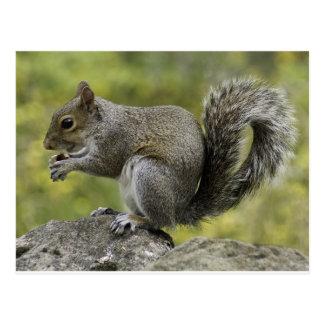 Sweet Squirrel (RSPCA) Postcard