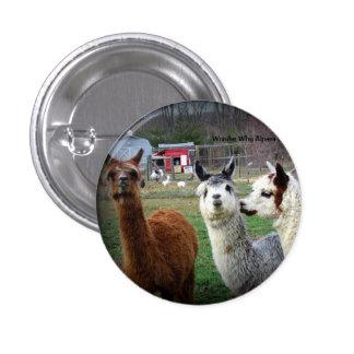 Sweet Suri Alpacas of Wonder Pinback Button
