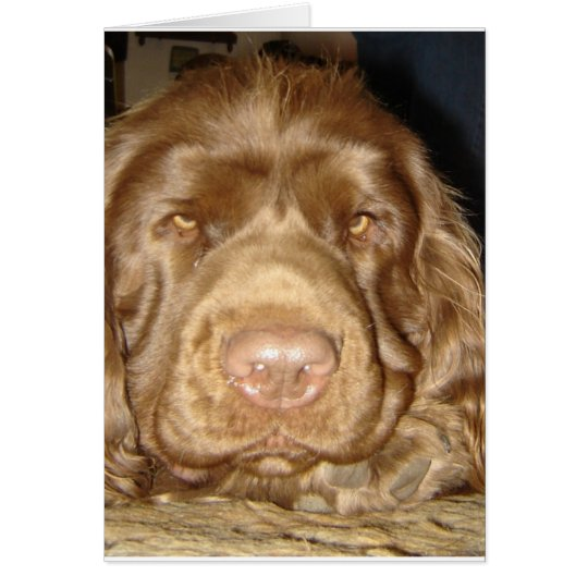 SWEET SUSSEX SPANIEL CARD