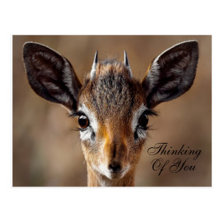"Sweet ""Thinking Of You"" Girly Antelope Postcard"