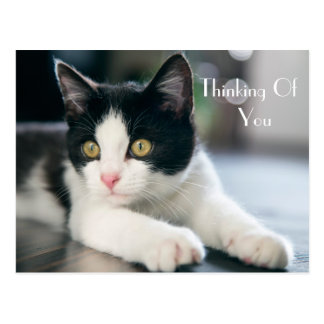 "Sweet ""Thinking Of You"" Tuxedo Kitten Greeting Postcard"