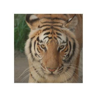 Sweet Tiger Wood Canvas