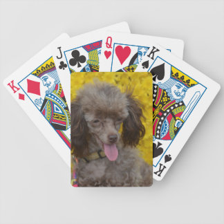 Sweet Tiny Brown Poodle Bicycle Playing Cards