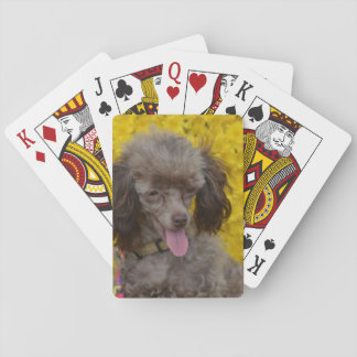 Sweet Tiny Brown Poodle Playing Cards