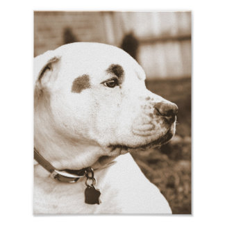 sweet white sepia pit bull hate deed not breed poster