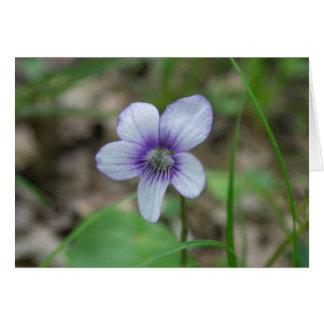 Sweet White Violet Horizontal Greeting Card