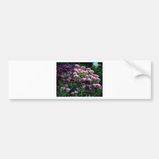 Sweet William blooms Bumper Sticker