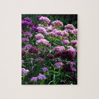 Sweet William blooms Jigsaw Puzzle