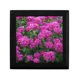 Sweet William in Bold Bloom Gift Box