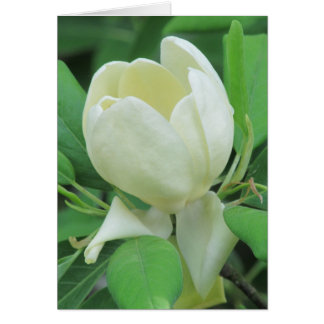 Sweetbay Magnolia Card