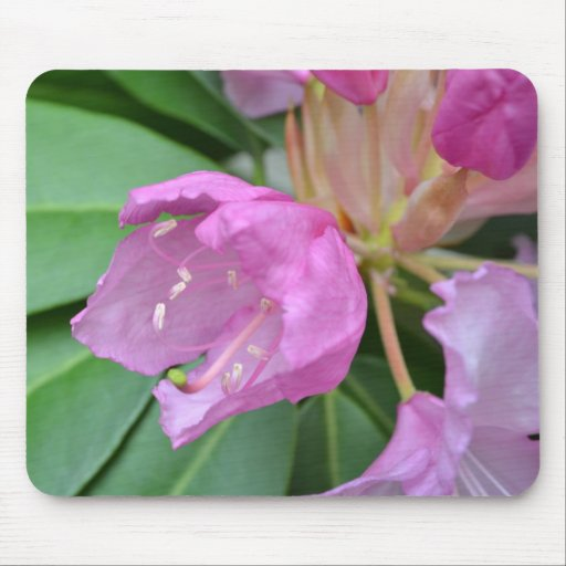 Sweetly Pink Flower Mousepads