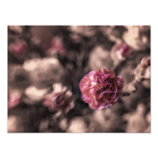 Sweetness Prints antiqued pink carnations Photograph