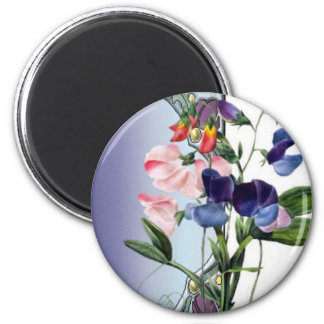 Sweetpea flowers 2 inch round magnet