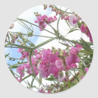 sweetpea sticker