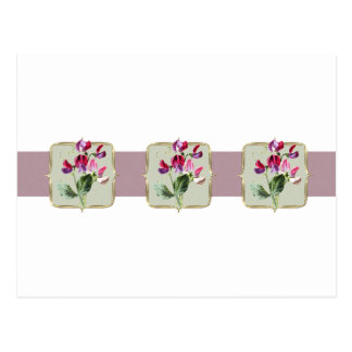 Sweetpea Vintage Flowers Wide Postcard