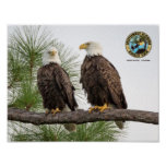 SWFL Eagle Cam Wall Poster