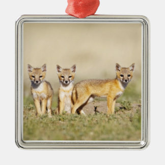 Swift Fox (Vulpes macrotis) young at den burrow, 3 Metal Ornament