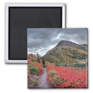 Swiftcurrent Pass Trail - Glacier National Park Magnet