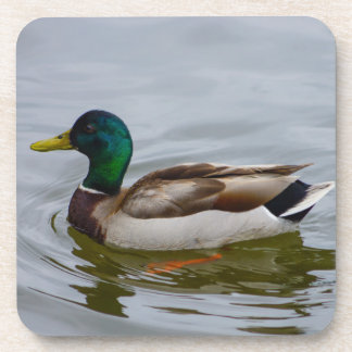 Swim Mallard Swim Drink Coasters