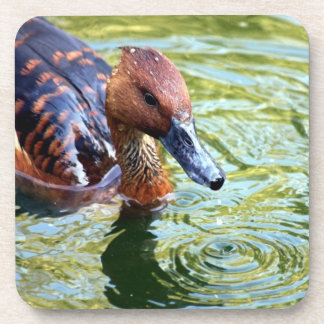 Swimming Duck Beverage Coasters