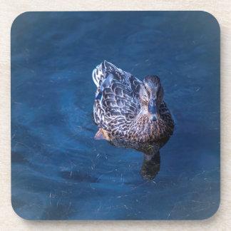 Swimming Duck Coaster