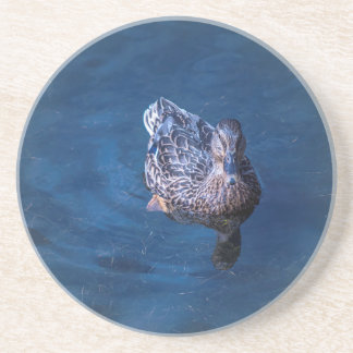 Swimming Duck Coaster