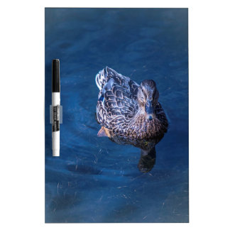 Swimming Duck Dry-Erase Whiteboard