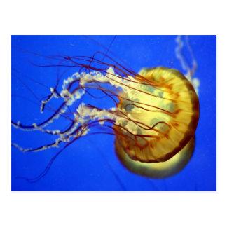 Swimming Jellyfish on Blue Postcard