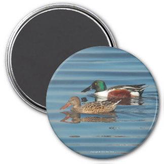 Swimming Northern Shovelers Magnet