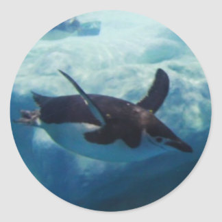 swimming penguin classic round sticker