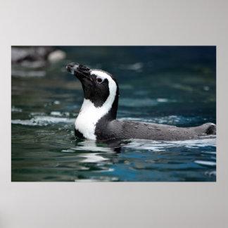 Swimming Penguin Poster