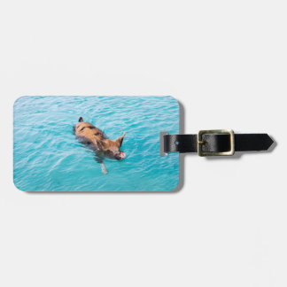 Swimming pig of Exuma Luggage Tag