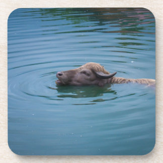 Swimming Water Buffalo Drink Coasters