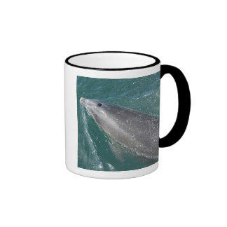 Swimming with dolphins and Dolphin Watch Ringer Coffee Mug