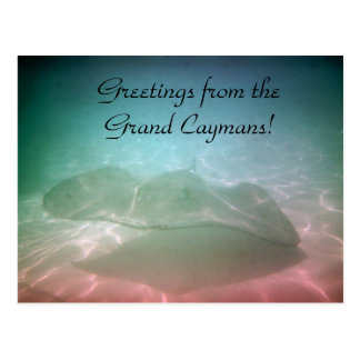Swimming with Stingrays Grand Caymans Jamaica Card Postcard