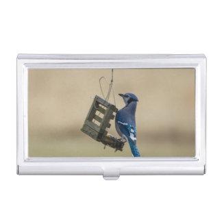 Swinging Blue Jay Business Card Holder
