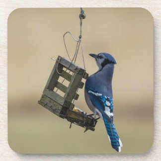 Swinging Blue Jay Coaster