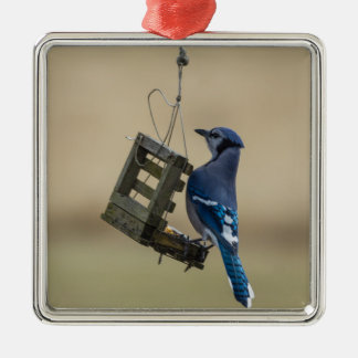 Swinging Blue Jay Metal Ornament