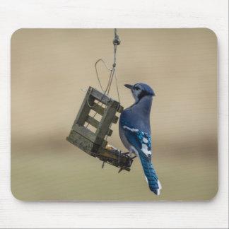 Swinging Blue Jay Mouse Pad
