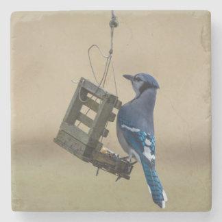 Swinging Blue Jay Stone Coaster